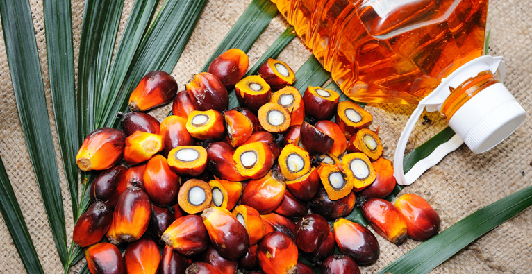 Image result for Processing of Palm-oil